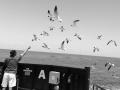 Feeing lots of birds