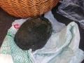Saved turtle