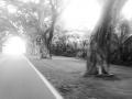 Strangled trees