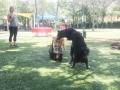 Amazing dog park