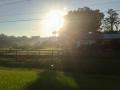 More glorious sun