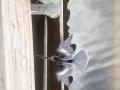 An Anhinga drying off