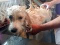 Pearl getting a bath